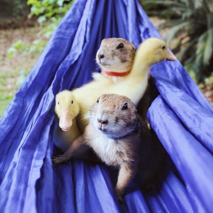 These Adorable Prairie Dogs Love To Spend Time With Their Animal Friends