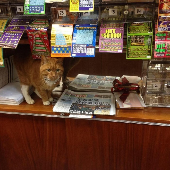 'At the store, he likes to sit near the entrance and greet customers'