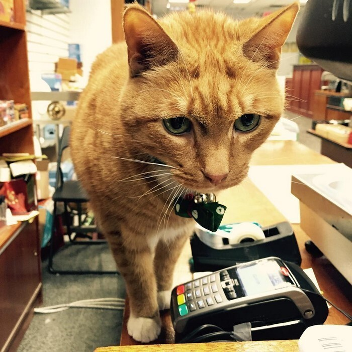 Bobo loves greeting customers with a meow and showing them around