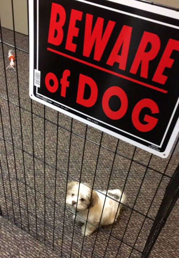 "10+ Dangerous Dogs Behind ""Beware Of Dog"" Signs"