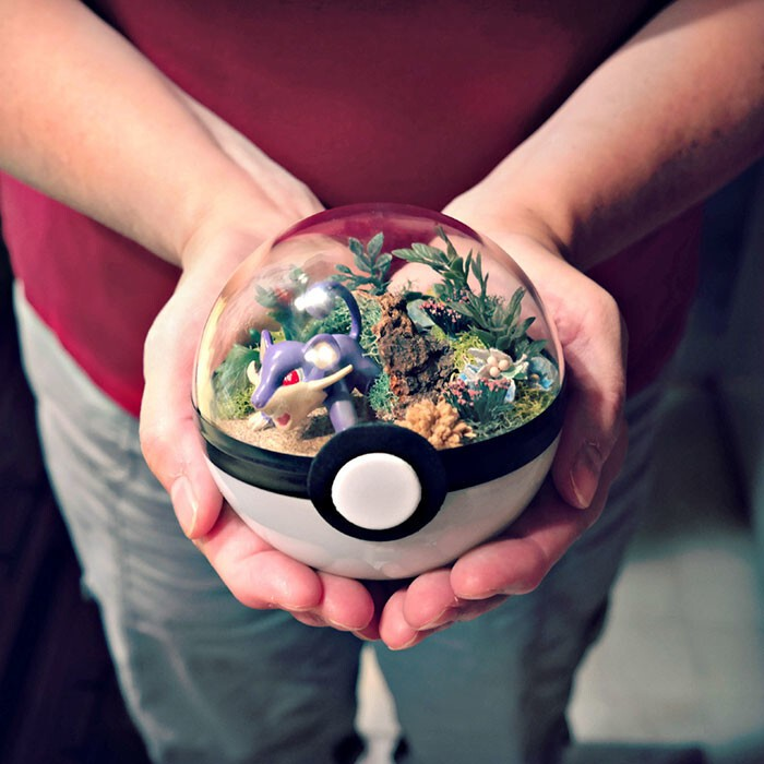 Pokeball Terrariums Are A Thing Now But The Demand Is So Big It's Hard To 'Catch' Them
