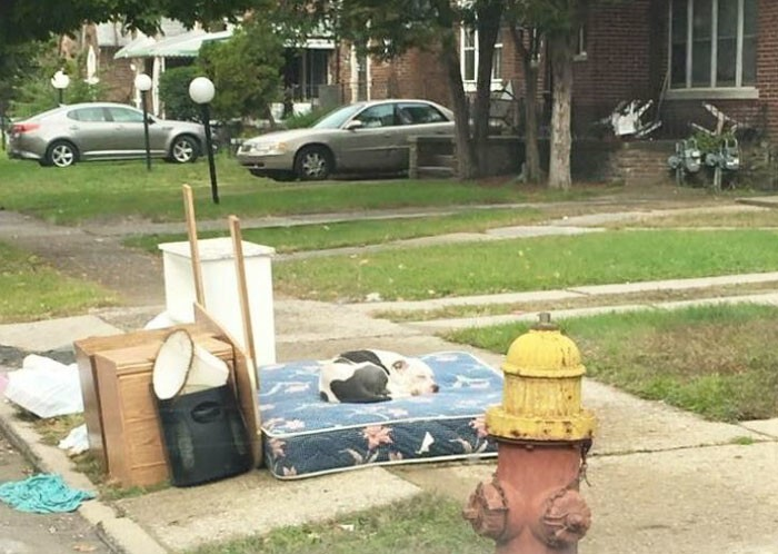When a family moved from Detroit, they left lots of trash behind them, and… their loyal dog Boo