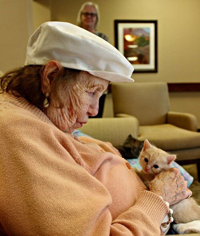 The initiative proved to be a success, as the overall condition of both the kittens and the elderly has improved.