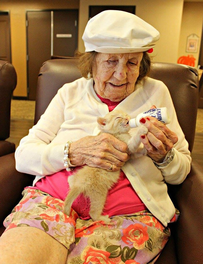 The joy that the elderly get from bottle feeding, socializing, and cuddling needy newborns is immense – and the kittens feel grateful too
