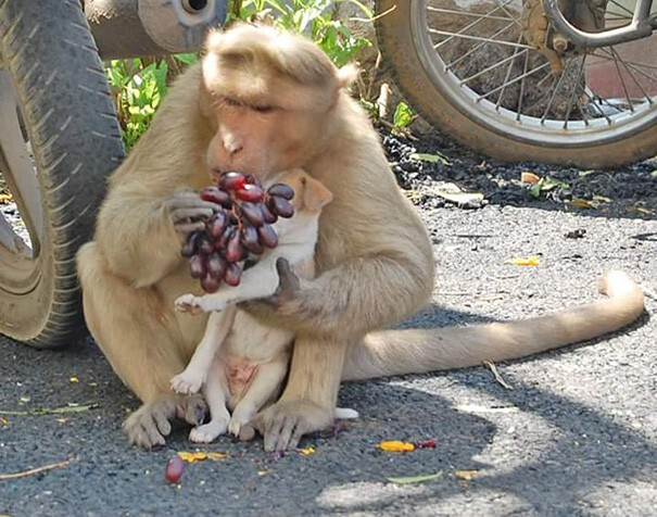 Monkey Adopts A Puppy, Defends It From Stray Dogs, And Lets It Eat First