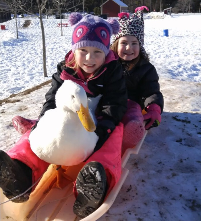 And they go sledding together!