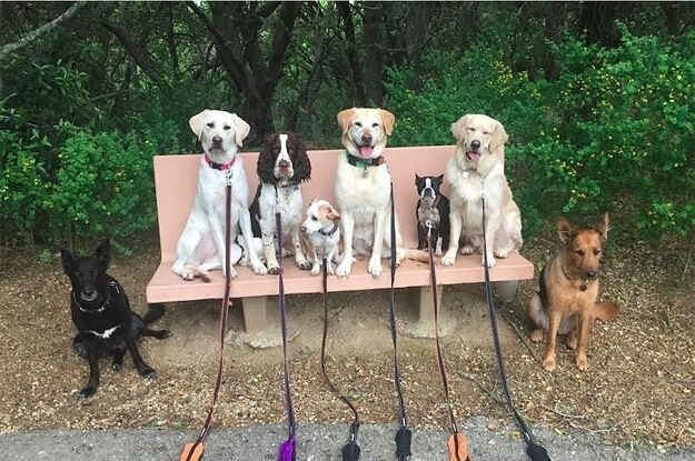 This Dog Walker Takes Awesome Posed Pictures Of His Pack
