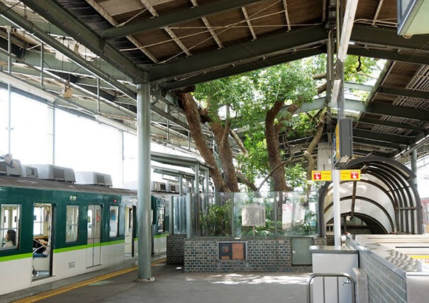 This Japanese Train Station Was Built Around A 700 Year Old Tree, And Here's Why