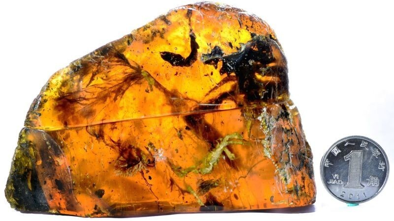 """Seeing this much of an animal preserved in amber is exciting,"" study author Ryan McKellar told Gizmodo. ""In this case we have the whole right side of the body."""