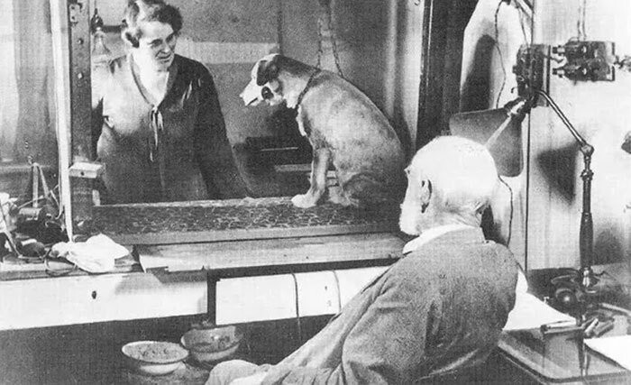 #28 Pavlov's Dog Experiment