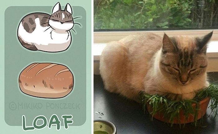 Artist Proves Cats Are More Bread Than You'd Think