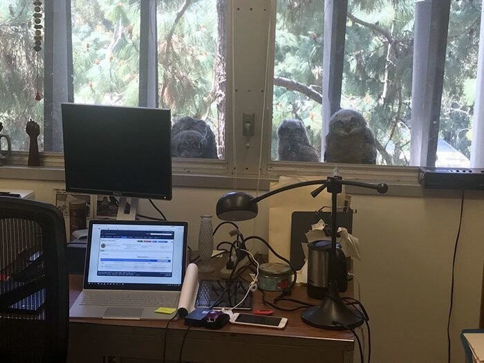 The Internet Can't Stop Laughing At These Owls Who Were Born Outside Of Office Window
