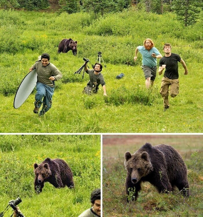 #19 Bear Chasing National Geographic Photographers