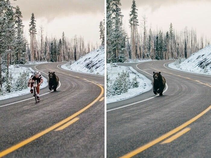 #15 Bear Chasing A Cycler
