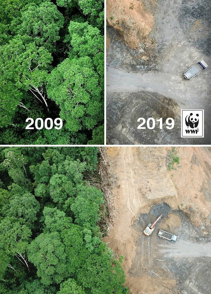 #13 #10yearschallenge Against Deforestation