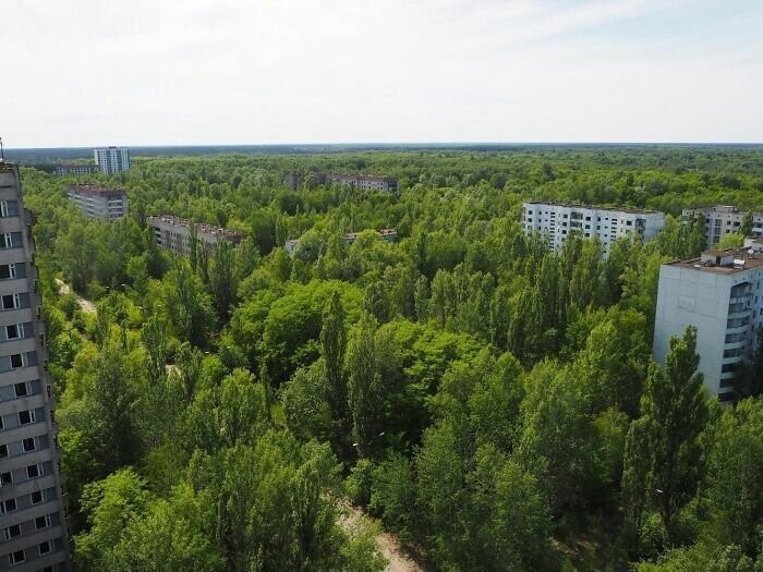 #9 30 Years Later, Pripyat Has Turned Into A Sort Of Nature Reserve