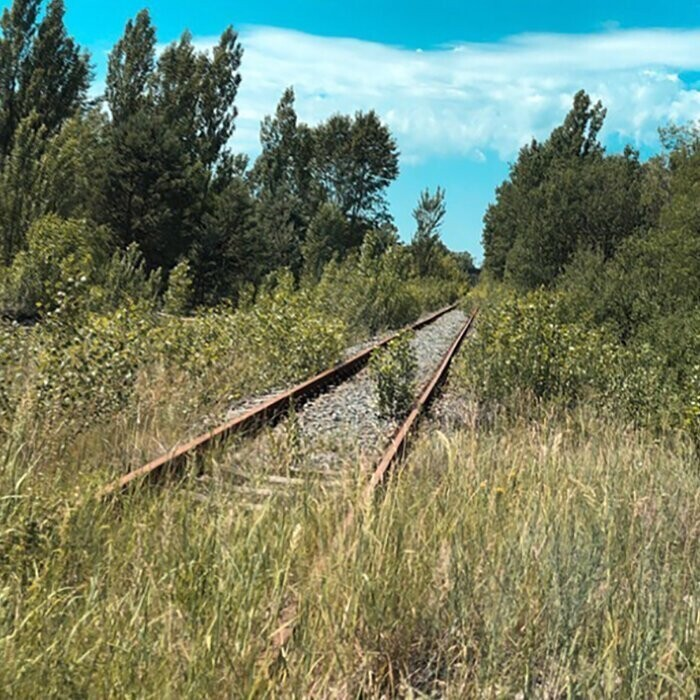 #29 Overgrown Rails. Nature Takes Everything Back