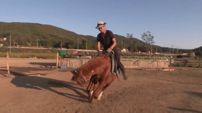 Jingang the horse pretends to 'die' in a dramatic way