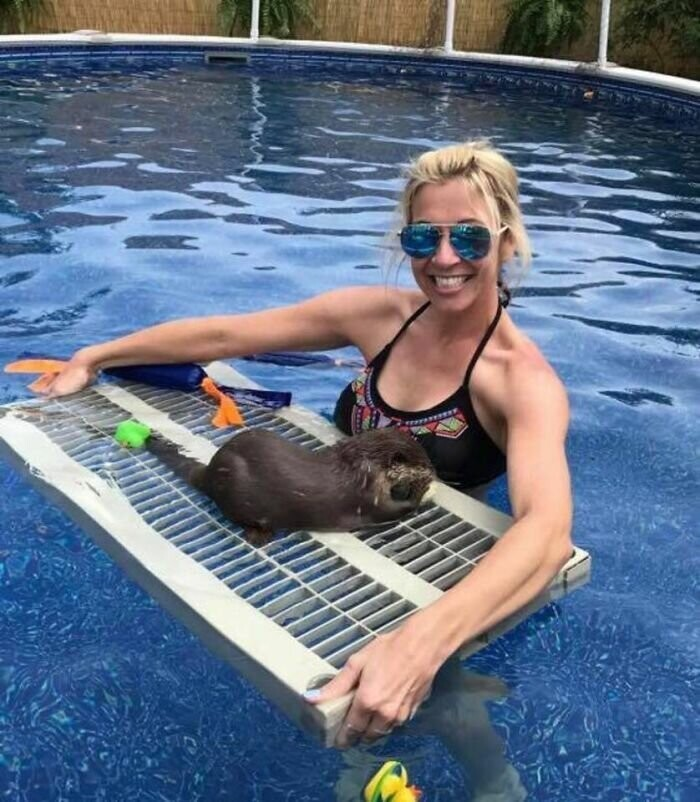 Adults Can Swim With Tiny Otters At This Animal Preserve, And The Photos Are Adorable