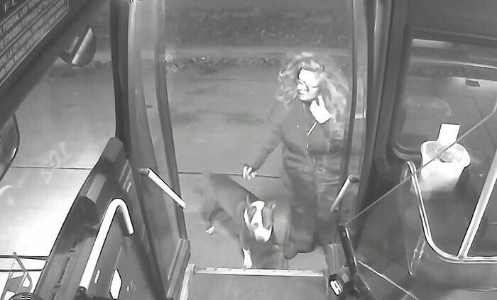 This Bus Driver Notices 2 Lost Dogs On The Roadside, Helps Them Make It Home For The Holidays