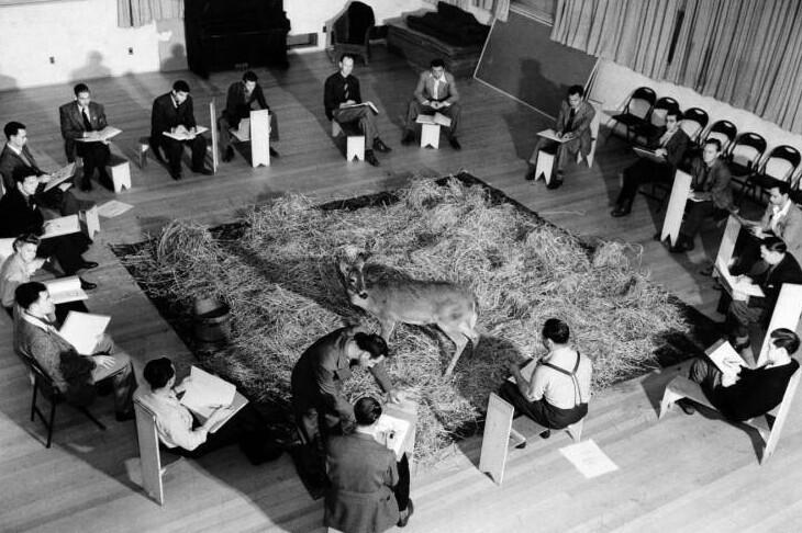 """Художники студии Disney изучают поведение оленя прежде, чем приступить к работе над мультфильмом """"Бемби"""", 1942 г."""