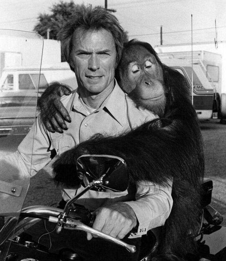"""Клинт Иствуд и его партнер по фильму """"Как ни крути - проиграешь"""" орангутан Клайд"""