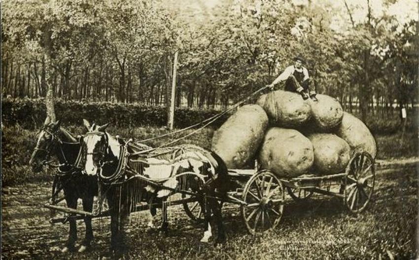 """Никакого """"фотошопа"""": откуда взялись фотографии с огромными овощами"""