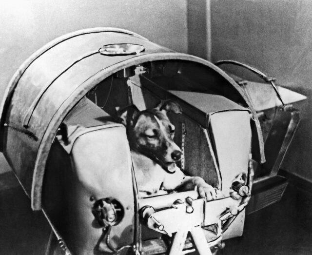 "Лайка, собака-космонавт, внутри корабля ""Спутник-2"""