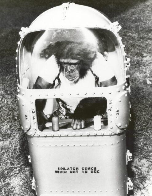 Герой поневоле: первый шимпанзе-астронавт Хэм