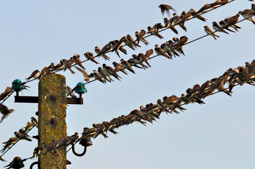 Почему птиц небьёт током, когда онисидят напроводах подогромным напряжением?