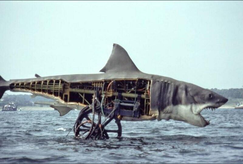 "1. Вид на акулу из фильма ""Челюсти"" сбоку"