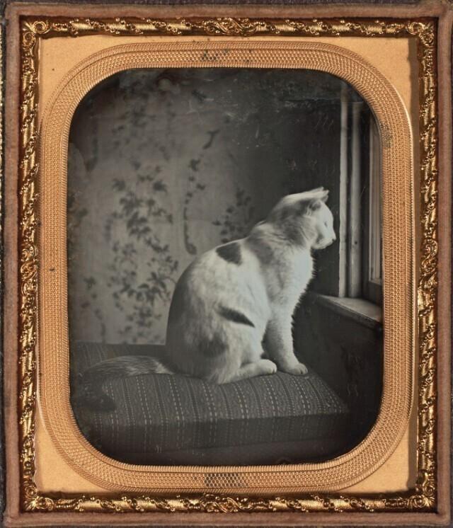 Первые фотопортреты животных надагерротипах 19века