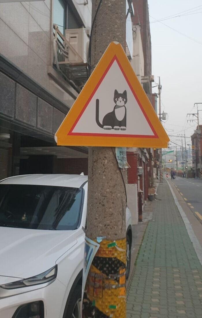 """Этот корейский знак означает: """"Осторожно, кошки!"""""""