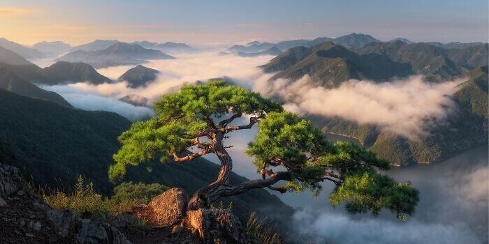 """""""ое любимое дерево в Южной Корее устояло после нескольких тайфунов и ураганов"""""""