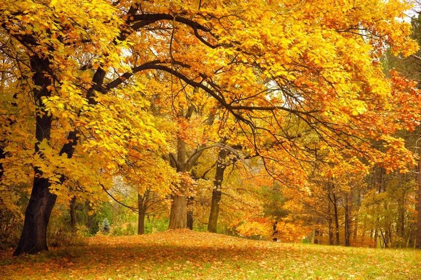 Нехуже других, если нелучше: почему стоит полюбить осень?