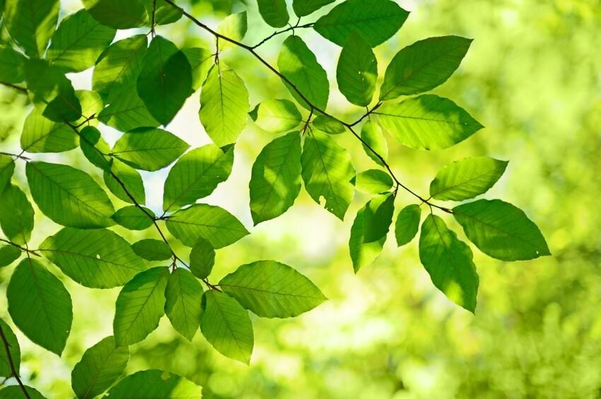 Функции зеленого покрова деревьев