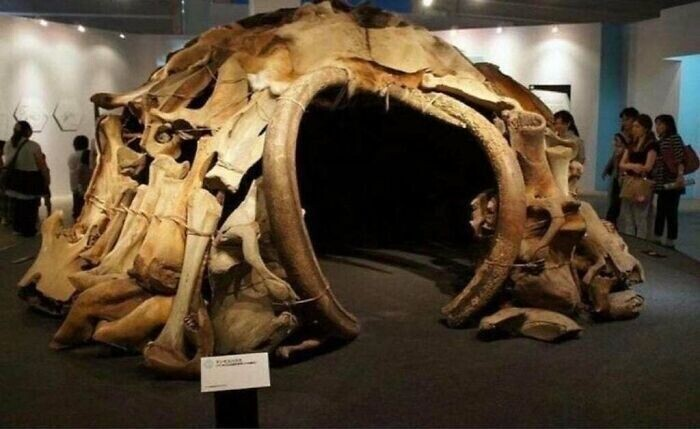 3. В 1965 году при раскопках в Межириче (Украина) было обнаружено 4 хижины, состоящие из 149 костей мамонта