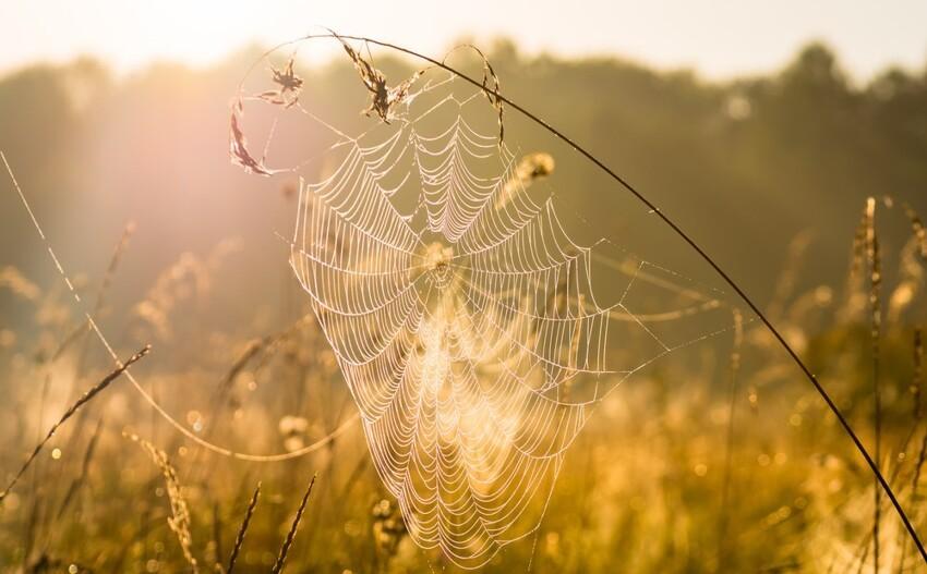 Бабье лето: почему короткий промежуток осени такназывают?