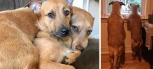"Dog Meets Her ""Twin"" On The Way To The Market, Convinces Its Owners To Adopt Him Immediately"
