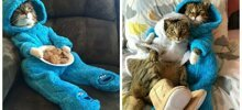 Meet Joey: The Cookie Monster Onesie Wearing Cat